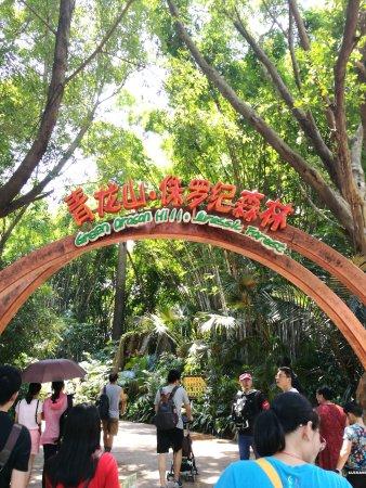 Chimelong Safari Park: Dinosaur path!