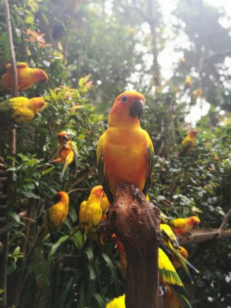 Chimelong Safari Park: Beautiful tropical bird!