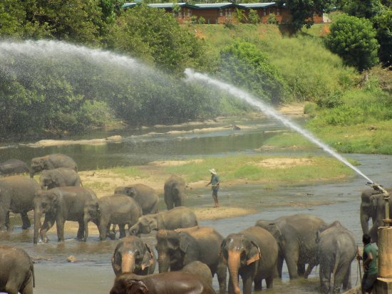 Pinnawala, Sri Lanka: As it seen on the pictures
