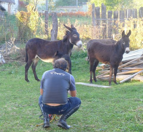 Cycling Romania: From the horse farm