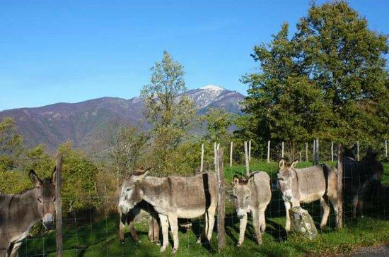 Sesta Godano, Italy: Mix di foto che parlano da sole :)