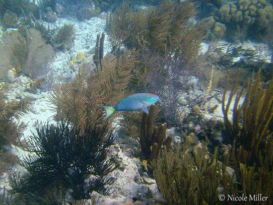 Kralendijk, Bonaire: 2- Bonaire diving