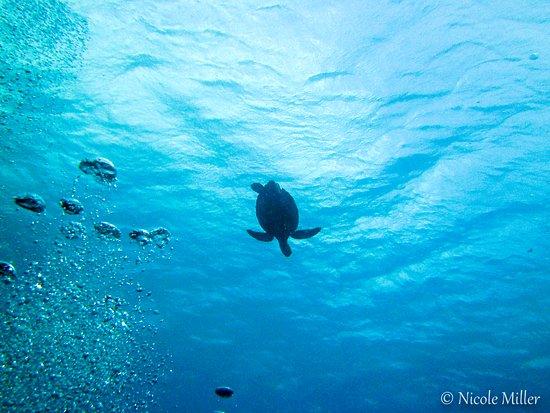 Kralendijk, Bonaire: 5- Bonaire diving