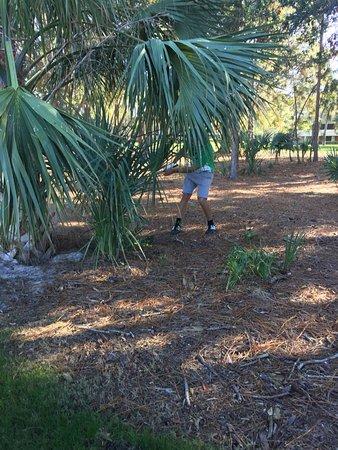 Palm Harbor, Floride : Innisbrook