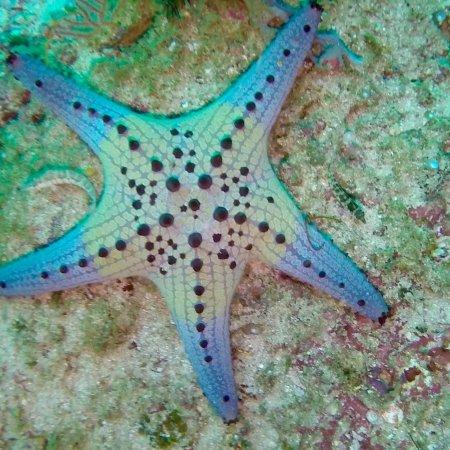 The Shark's Tail Dive Resort: photo1.jpg