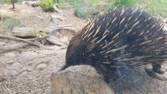 Healesville, Australia: 20171214_120012_large.jpg
