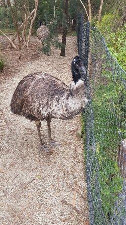 Healesville, Australia: 20171214_115510_large.jpg