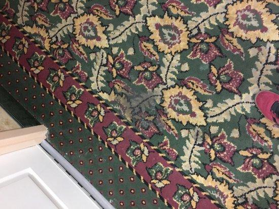 Hampton Inn & Suites Palm Coast: hallway carpet