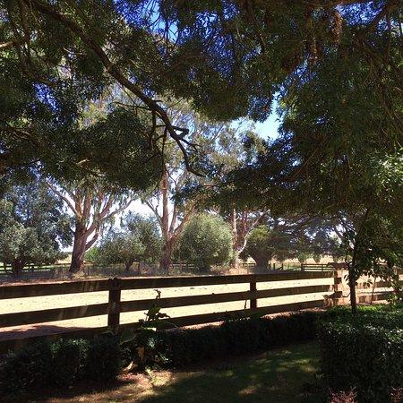 Hepburn Springs, Australia: Hepburn Lagoon - Trail Rides