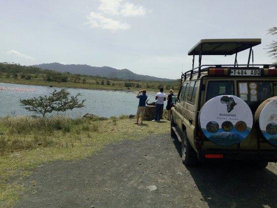 Bushwide African Safaris