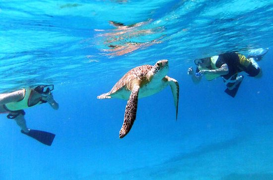 Turtle Cove Snorkel and Sail Adventure at Buck Island National...