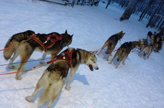 Ruka Snowmobile Adventure con Husky