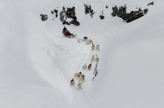 Ilulissatでの犬の日