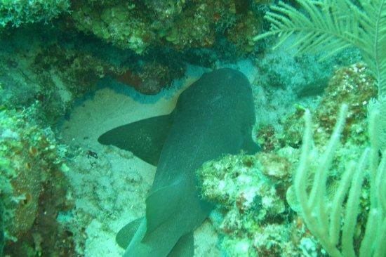 Pro Dive International: DSC08137_large.jpg