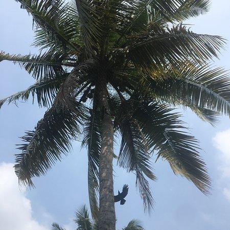 Vasundhara Sarovar Premiere: photo0.jpg