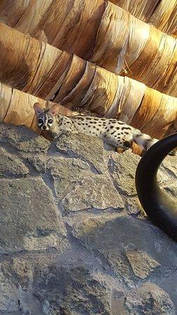Ndutu Safari Lodge: 20171208_071818_large.jpg