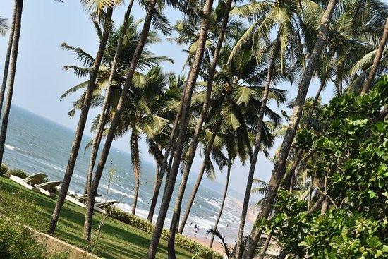 Sinquerim, India: DSC_0138_large.jpg