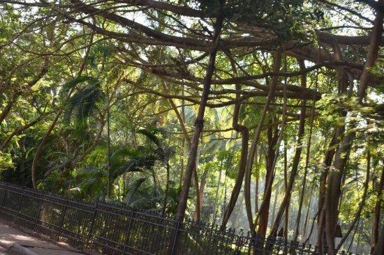 Sinquerim, India: DSC_0131_large.jpg