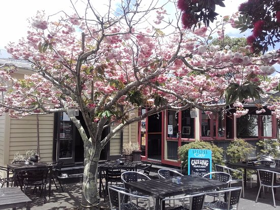 Success Cafe & Bar : Cherry Blossom in full bloom