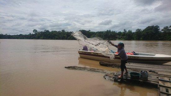 Sukau, Malaisie : DSC_1508_large.jpg