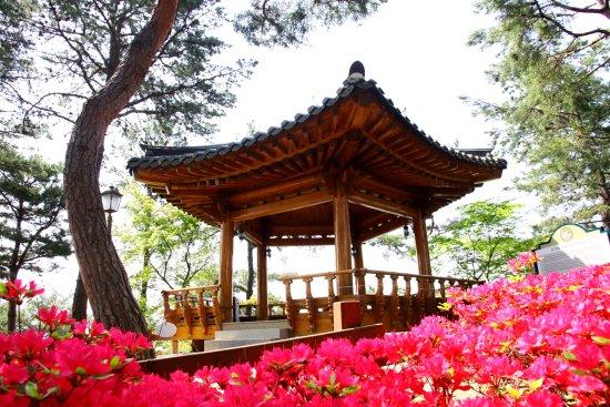 Cheongju, South Korea: 봄꽃이 만발한 청남대 오각정