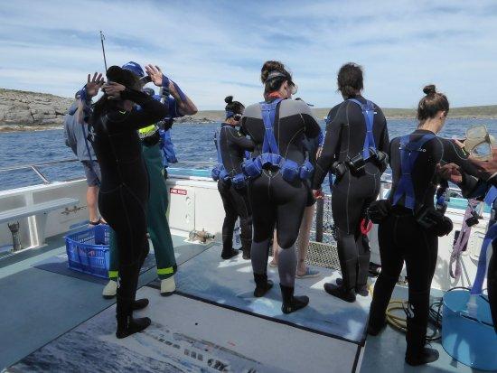 Πορτ Λίνκολν, Αυστραλία: Diver Getting ready