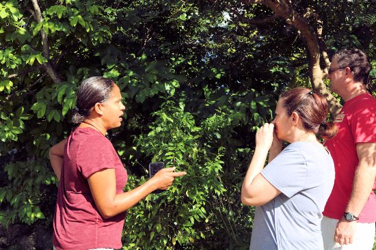 St. John's, Antigua: A walk in the garden with Nicole telling stories about medicinal plants and herbs.