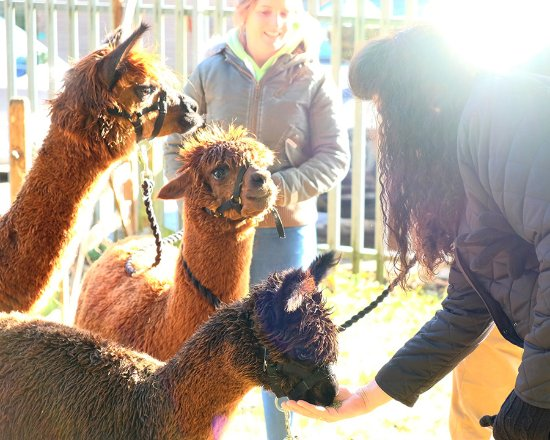 Wyld Court Alpacas