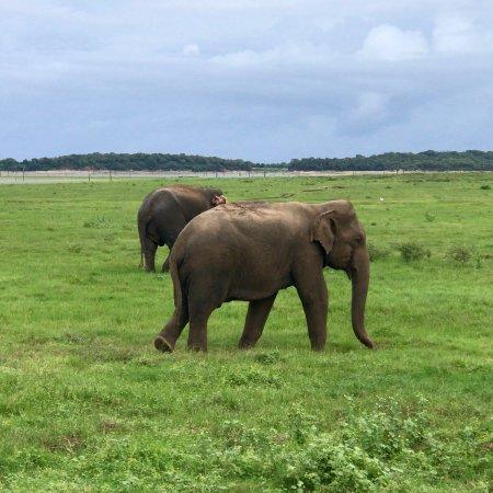 Beruwala, Sri Lanka: photo0.jpg