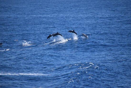Devonport, Australia: DSC_0133_large.jpg