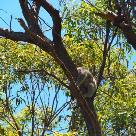 Magnetic Island, Austrália: photo3.jpg