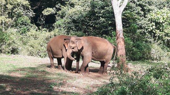 Sen Monorom, Καμπότζη: 20171215_091424_large.jpg