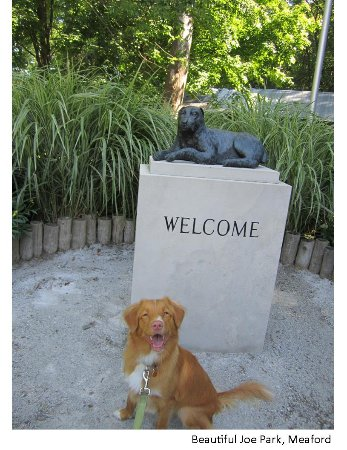 Meaford, Canadá: Take you pooch's photo here... & remember to pat Beautiful Joe's head for 100 dog years of good
