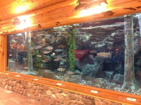 Hamburg, PA: lake fishes