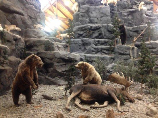 Hamburg, PA: bears