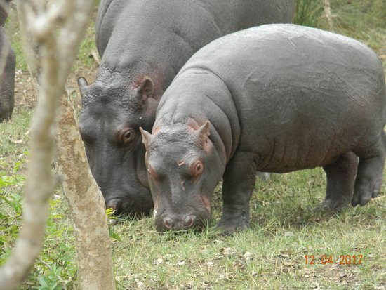 Heritage Day Tours & Safaris: Mama and baby