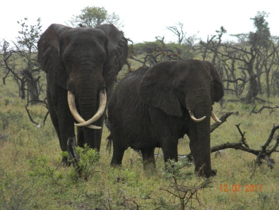 Heritage Day Tours & Safaris: Amazing Animals!
