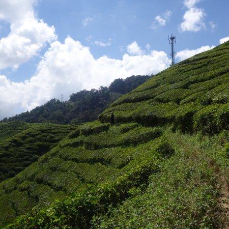 Tanah Rata, Malezya: photo6.jpg