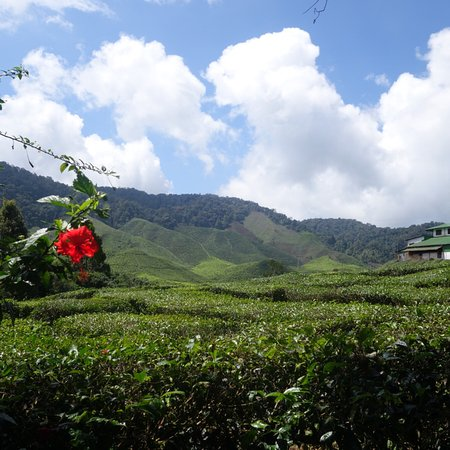 Tanah Rata, Malezya: photo7.jpg