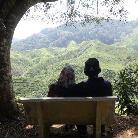 Tanah Rata, Malezya: photo8.jpg