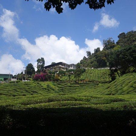 Tanah Rata, Malezya: photo9.jpg