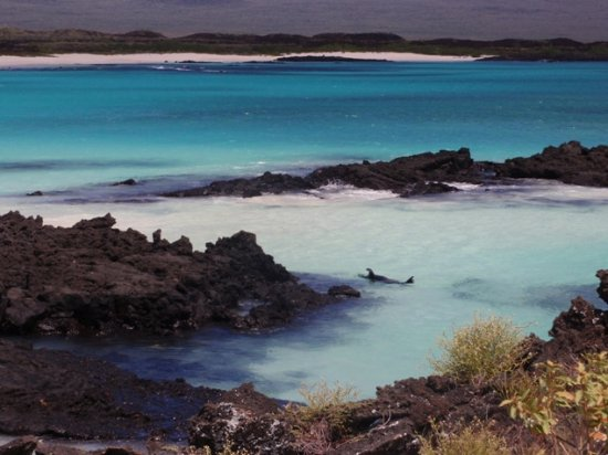 写真Galapagos Blue Evolution枚