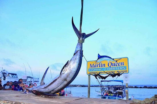 ‪Marlin Queen Fishing Charters‬