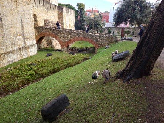 Castelo de Sao Jorge : IMG_20171211_122300_large.jpg