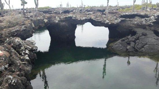 Puerto Villamil, Ecuador: vegetcion tipica sobre roca volcanica negra