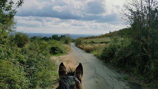 ASD Ranch Country Life