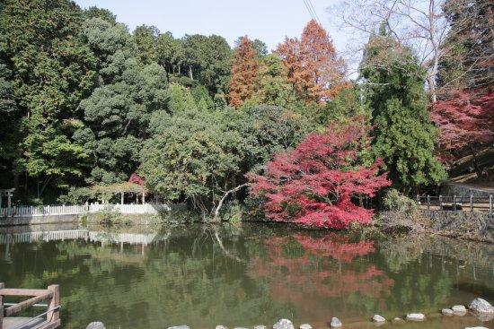 Saijosan Park Momiji Yama