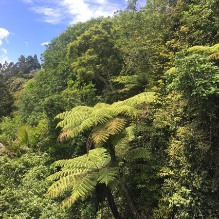 Titirangi, Nova Zelândia: The view from the canopy balcony.