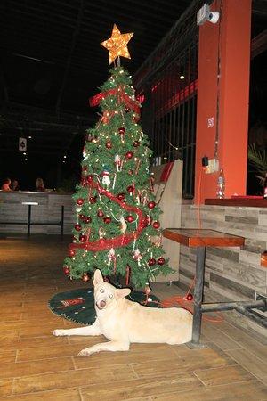 Playa Potrero, Costa Rica: Christmas in Costa Rica