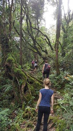 Cameron Highlands Trail No. 10: 20171213_153025_large.jpg